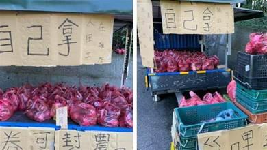 老闆還在田裡!貨車上擺火龍果「一袋100自己拿」 10個小時後「回到車上秒傻住」:不愧是台灣