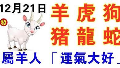 12月21日生肖運勢_羊、虎、狗大吉