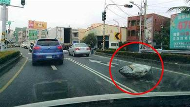 有魚跳車!路邊驚現「整條完整鮪魚」躺路邊...超巨大size網友驚:誰掉了100萬?