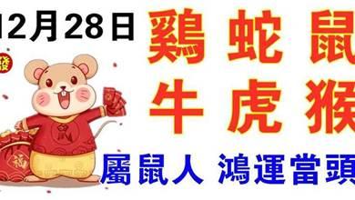 12月28日生肖運勢_雞、蛇、鼠大吉