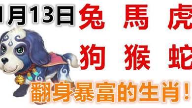 1月13日生肖運勢_兔、馬、虎大吉